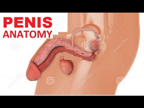 Real penis photos with diagrams